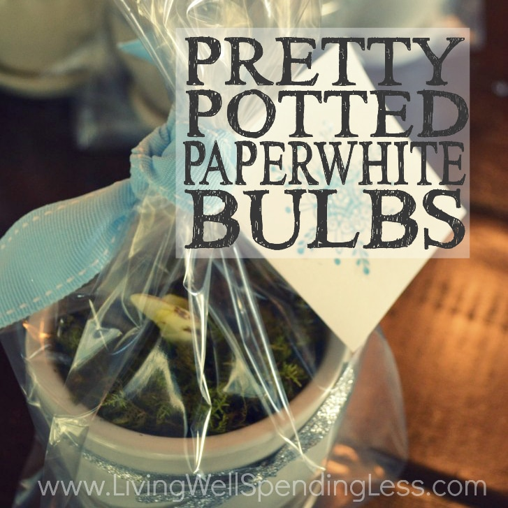 Pretty Potted Paperwhite Bulbs | How to Make Potted Paperwhites | How to grow Paperwhites | Paperwhites Planting Guide | Easy To Grow Bulbs | Guide to Paperwhites | Perfect Paperwhites in Pots