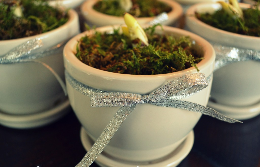 Add a layer of moss on top of the potting soil and finish with a silver bow around the flower pot.