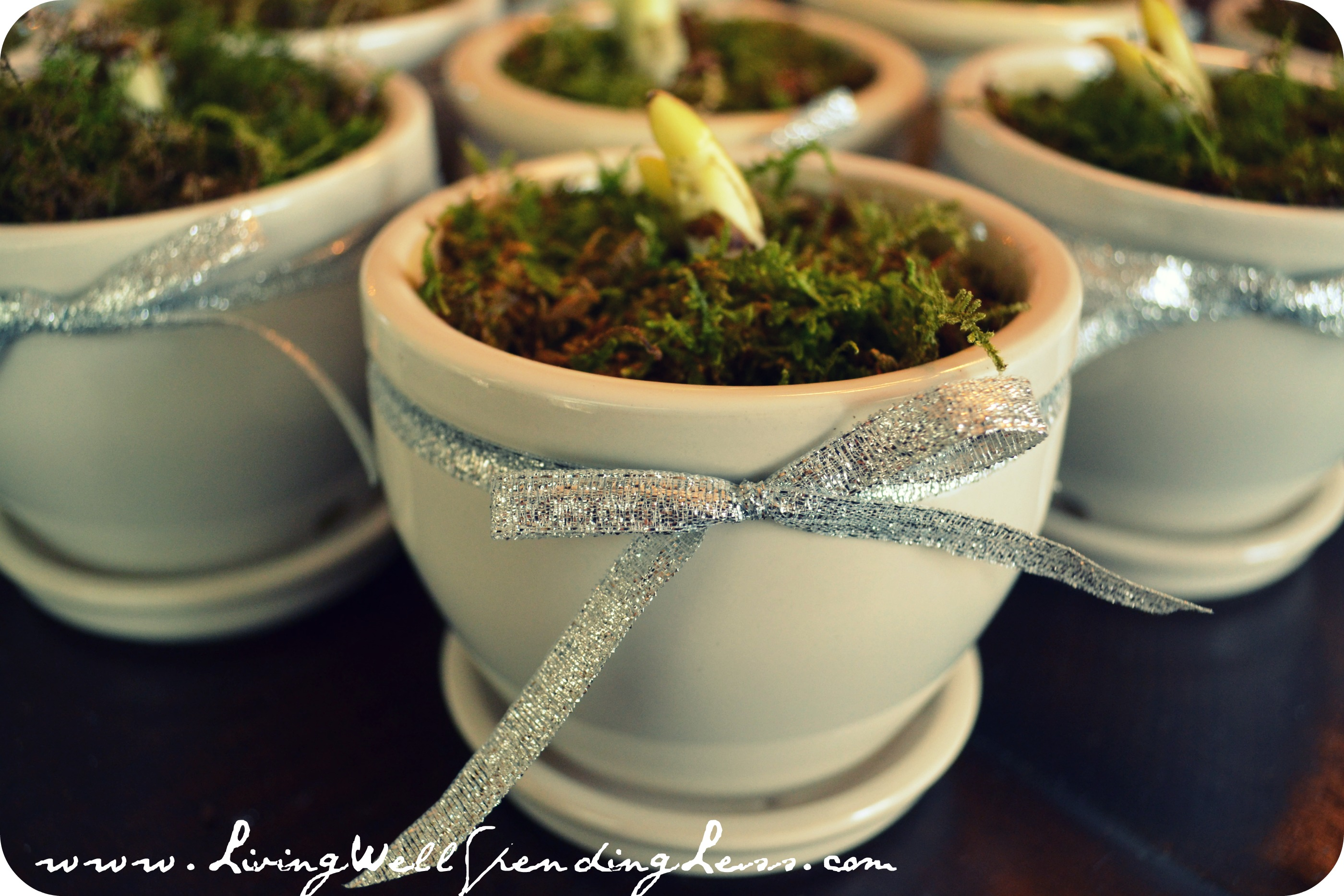 Handmade Holiday Gifts Potted Paperwhite Bulb Group Gift