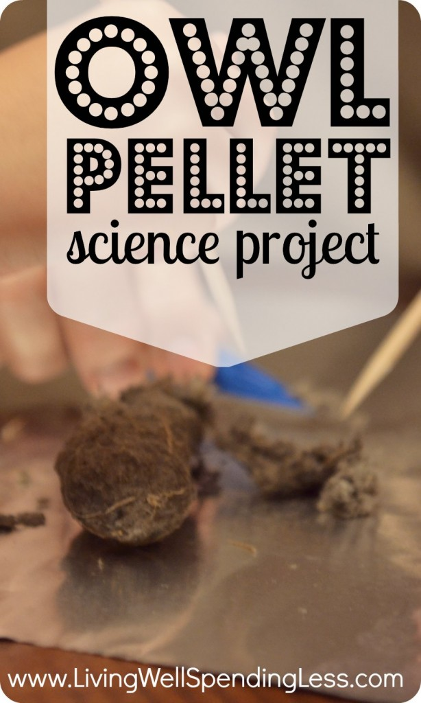 Have fun while learning with this owl pellet science project!