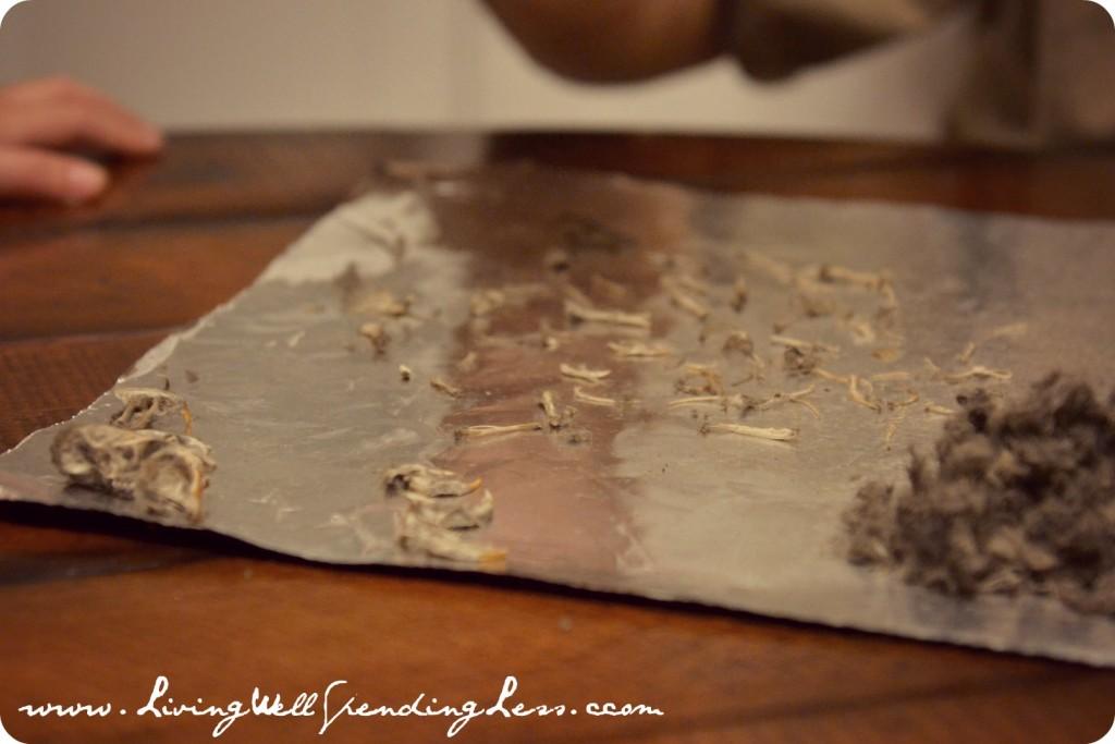 So many bones in an owl pellet. Who knew?!