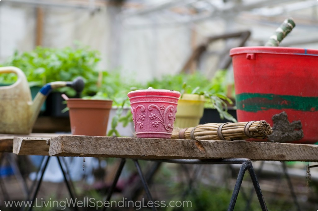 There are so many different size, color, and shape containers to choose from when you start container gardening.