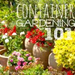 Container Gardening 101 Square 2