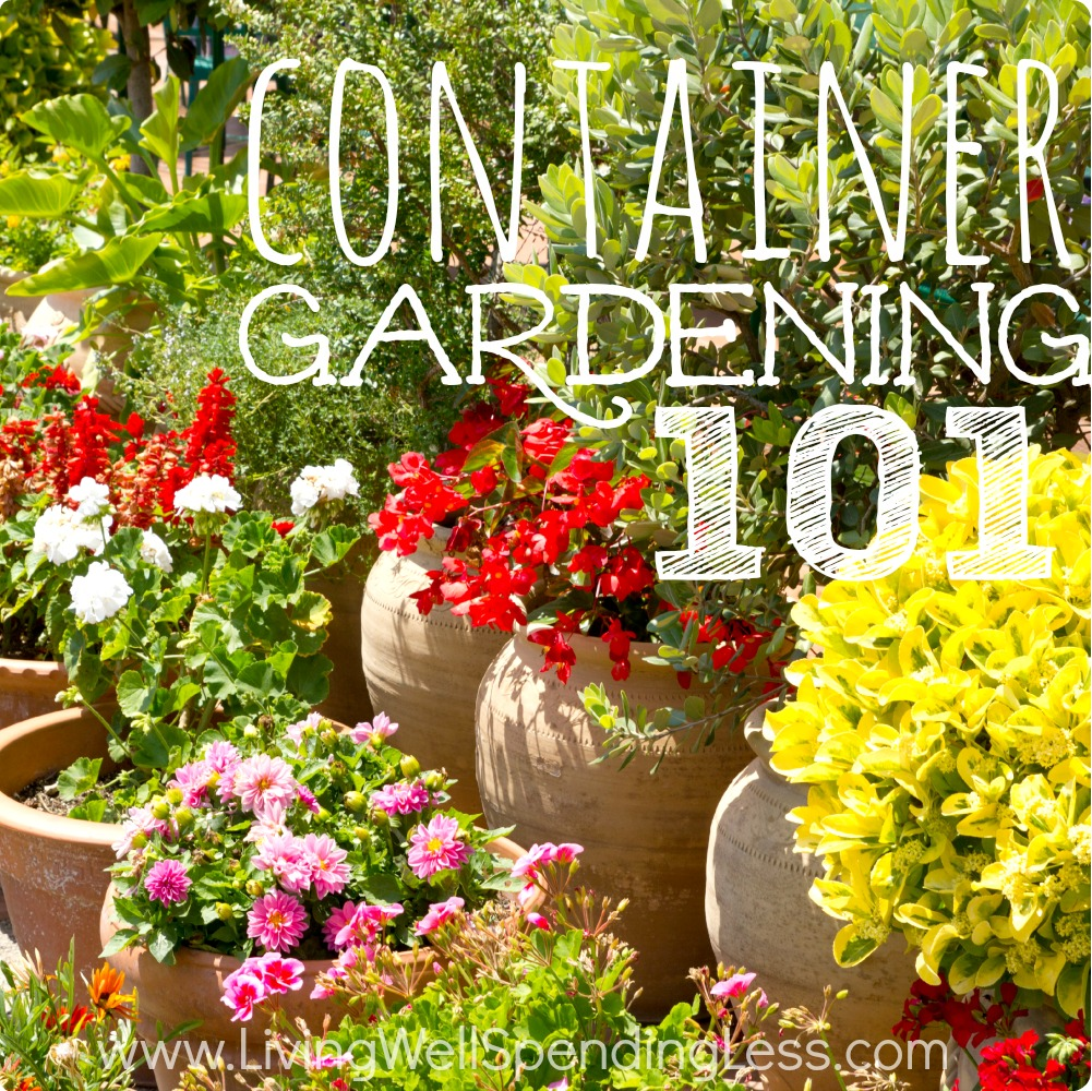 Container gardening for beginners living well spending less for Gardening advice