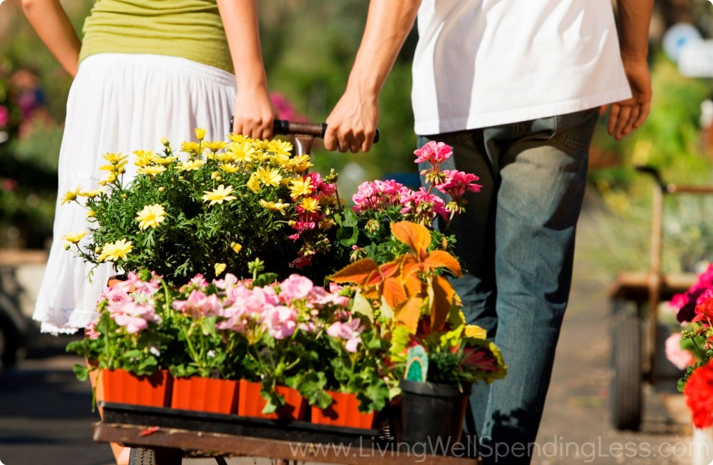 Flowers are a great option for container gardening because they are easy to take care of and look great!