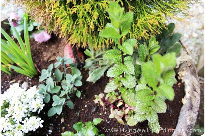 Add some edible herbs and plants to your container garden for some variety.