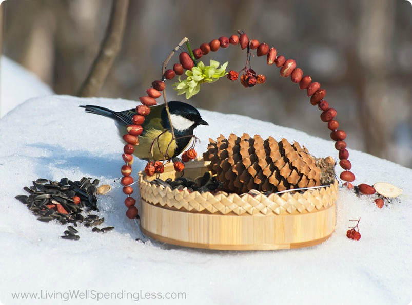 Set up a basket of food for your feathered friends. Feeding the birds during winter helps them stay healthy and happy.