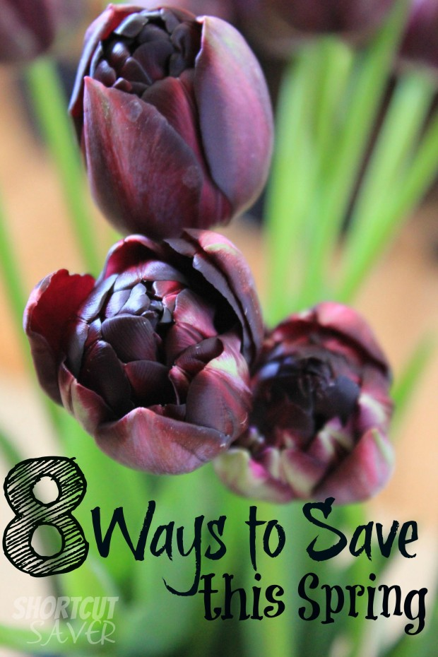 ways-to-save-this-spring-620x930