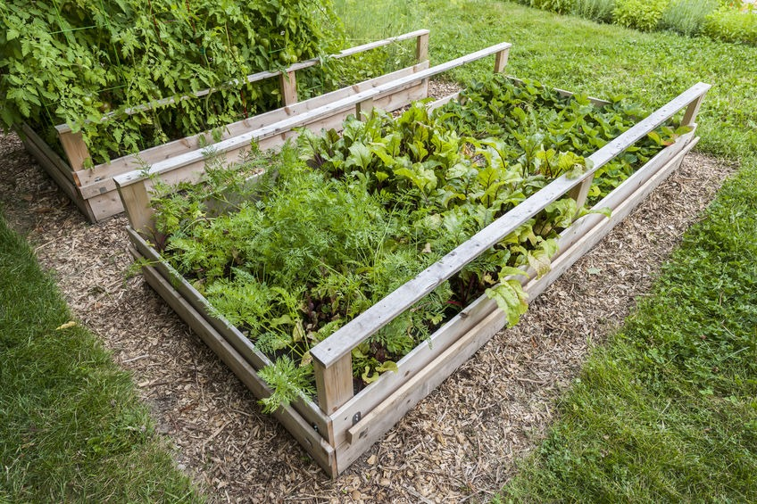 Want to grow your own food? These 7 important tips on how to grow a vegetable garden will help you make it happen no matter what your experience level! #growingagarden #howtogarden #vegetablegarden #gardentipsandtricks