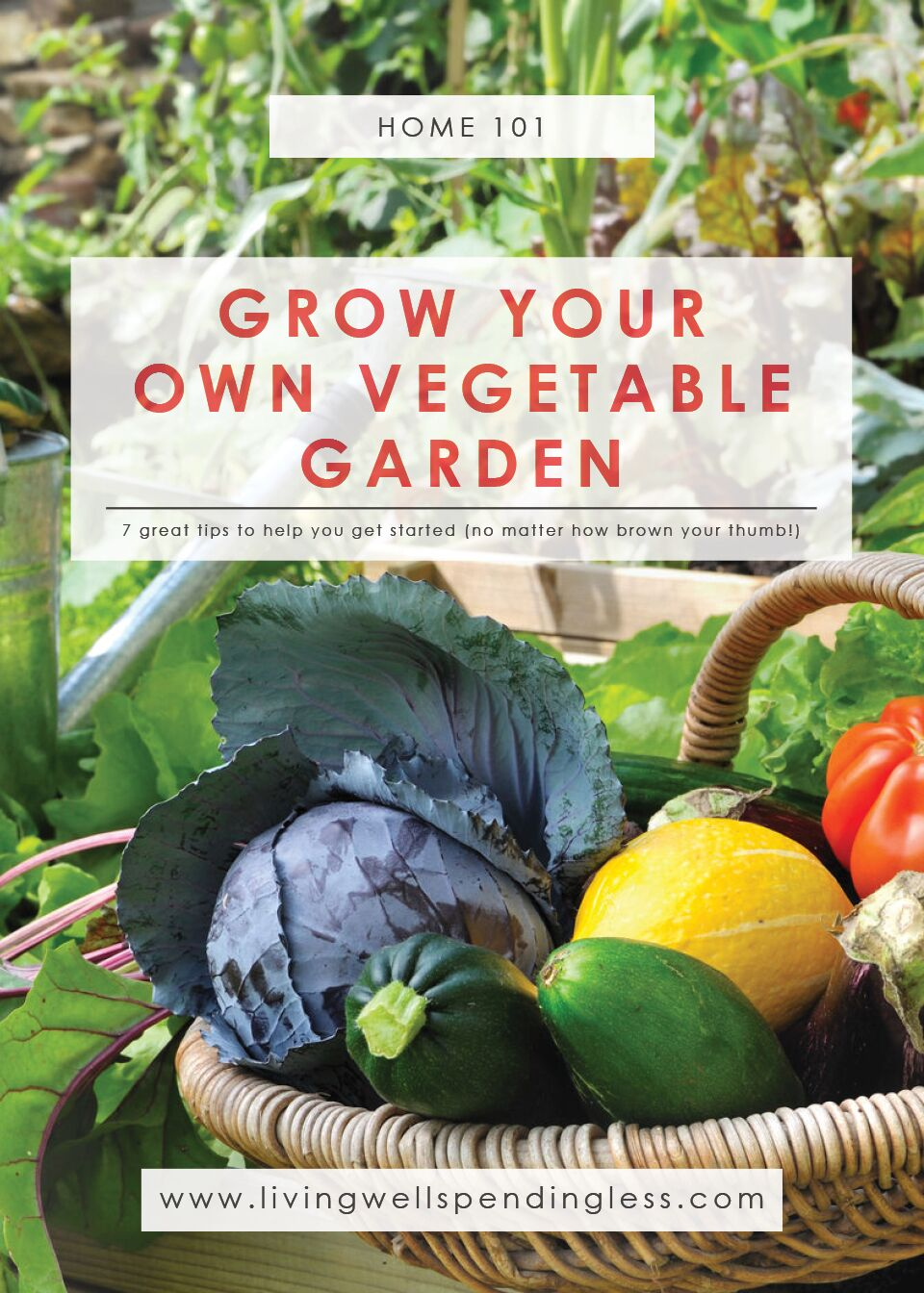 How to Grow a Vegetable Garden | Gardening 101 | Vegetable Gardening for Beginners | Growing Your Own - Vegetables