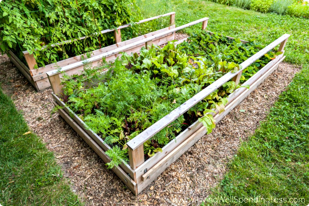 How to Grow a Vegetable Garden Raised Beds