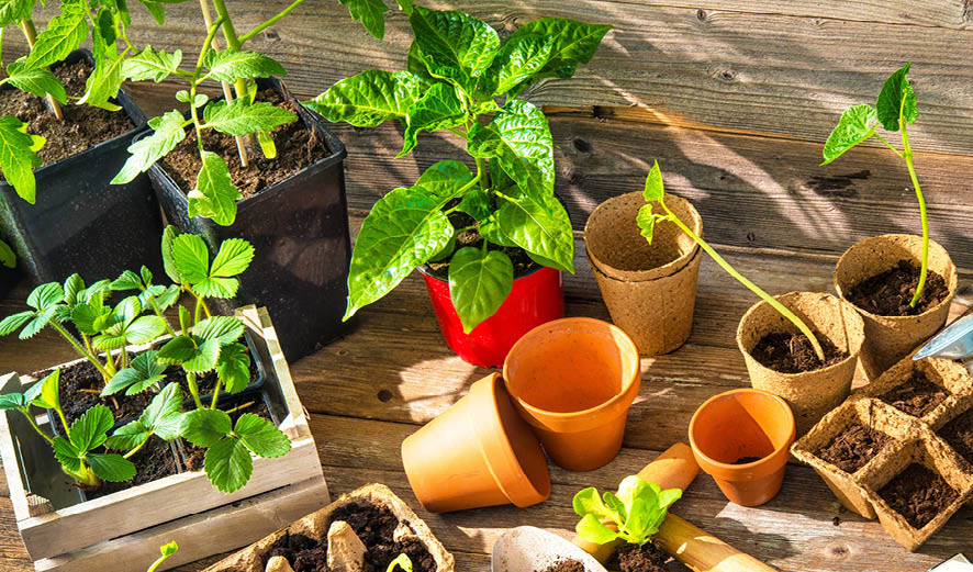 How to Grow a Vegetable Garden: 7 Important Steps