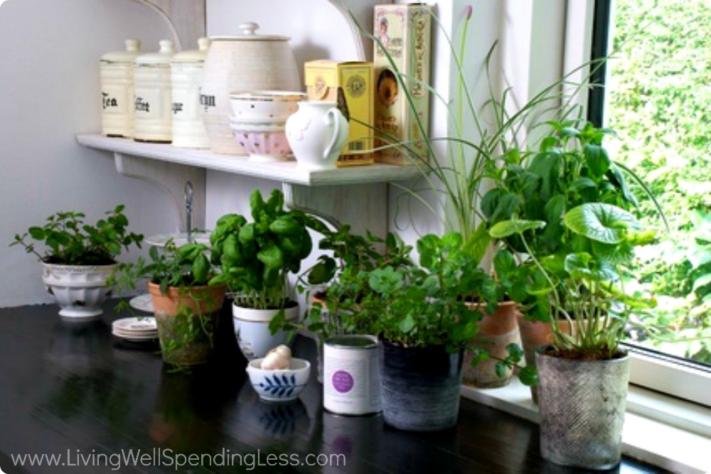 Windowsill herbs are a great addition to the kitchen--snip and add the fresh grown herbs to your favorite dishes.