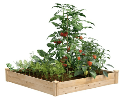 raised garden beds to help prevent weed growth.