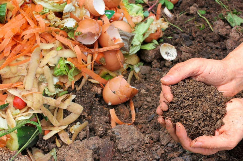 Everything in your compost pile should always be plant based.