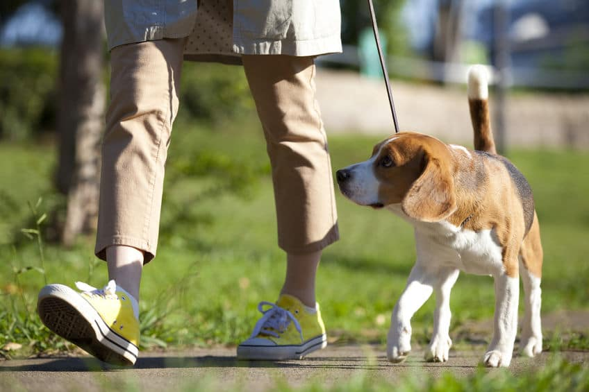 Taking your dog for a daily walk is an effective habit to recharge your internal batteries.