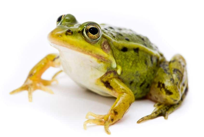 Eat That Frog: 21 Great Ways to Stop Procrastinating and Get Things Done by Brian Tracy