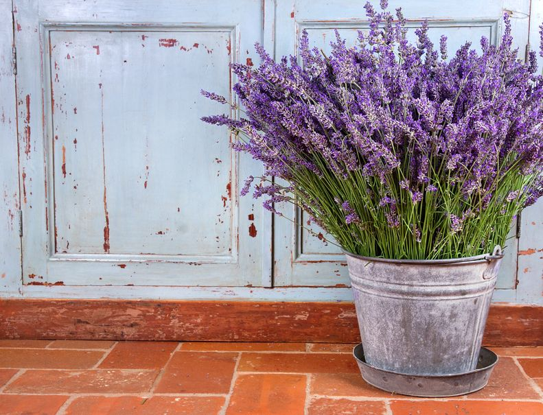 14412288 - bouquet of lavender in a rustic decorative setting