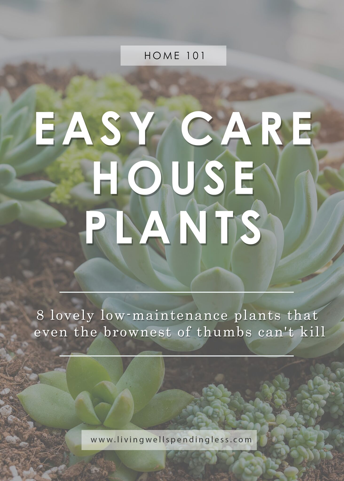 Low maintenance houseplants easy care house plants for Easy to maintain flowers and plants