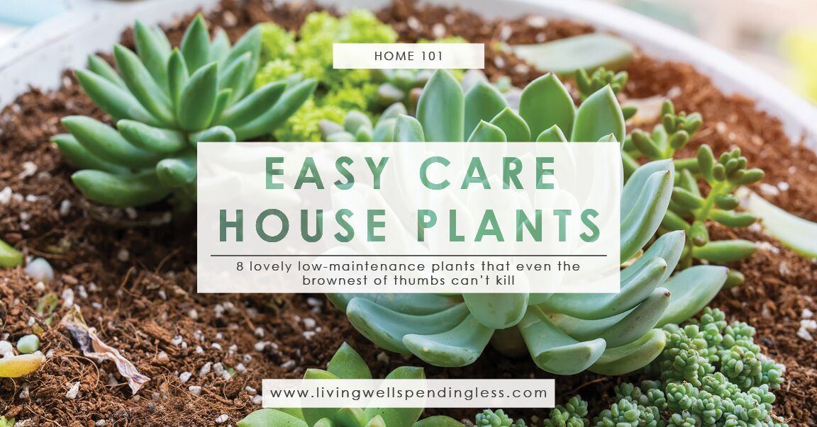 Low maintenance houseplants easy care house plants for Easy maintenance bushes