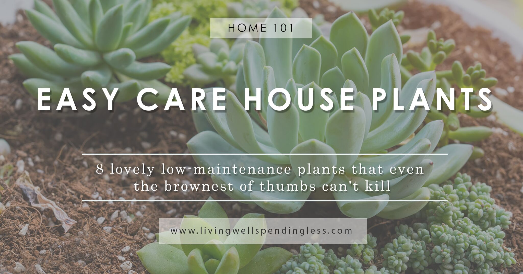 Low maintenance houseplants easy care house plants for Easy care shrubs front house