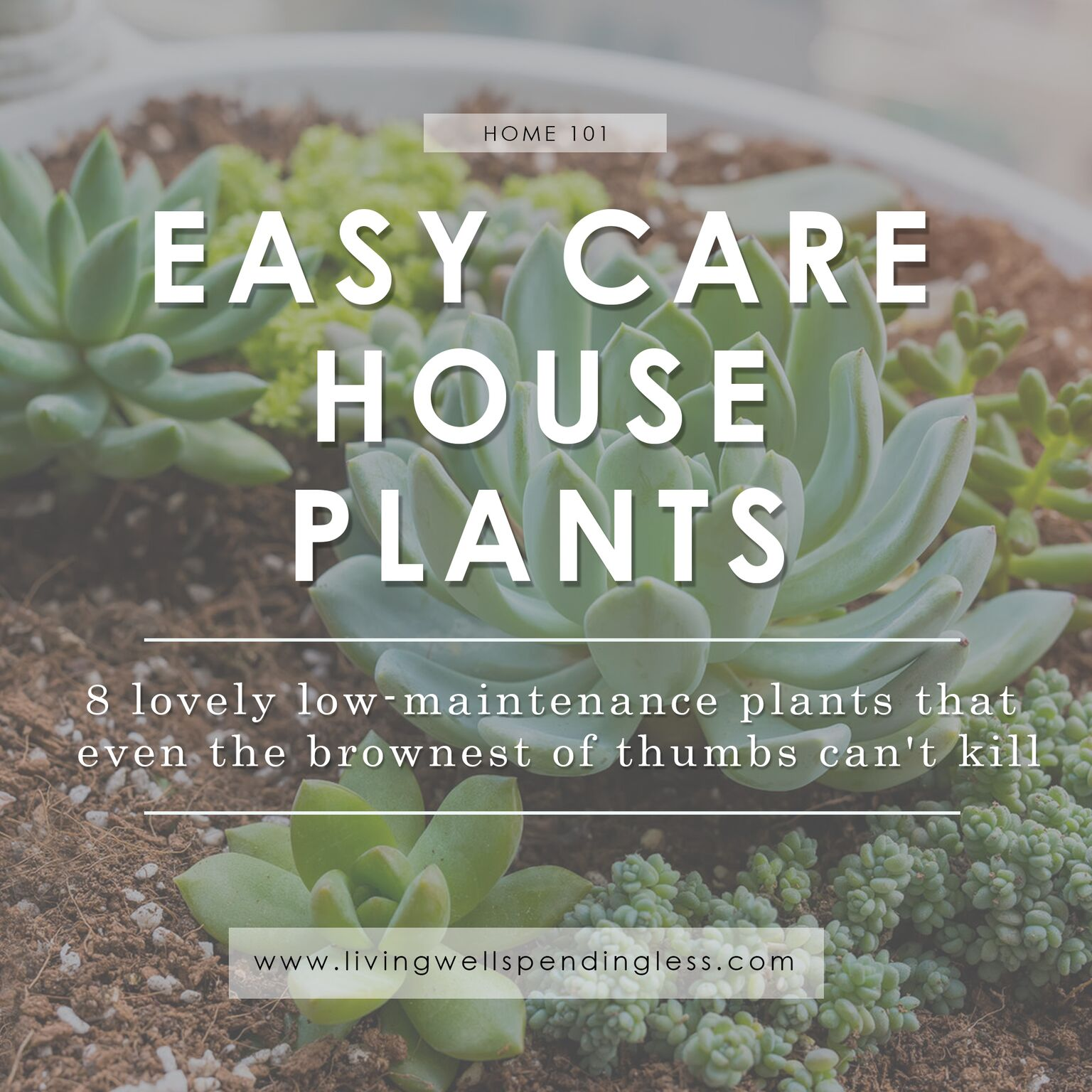 Easy Care House Plants Living Well Spending Less
