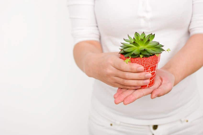 Offer your guests something small like a succulent plant to remember your fun backyard party by.