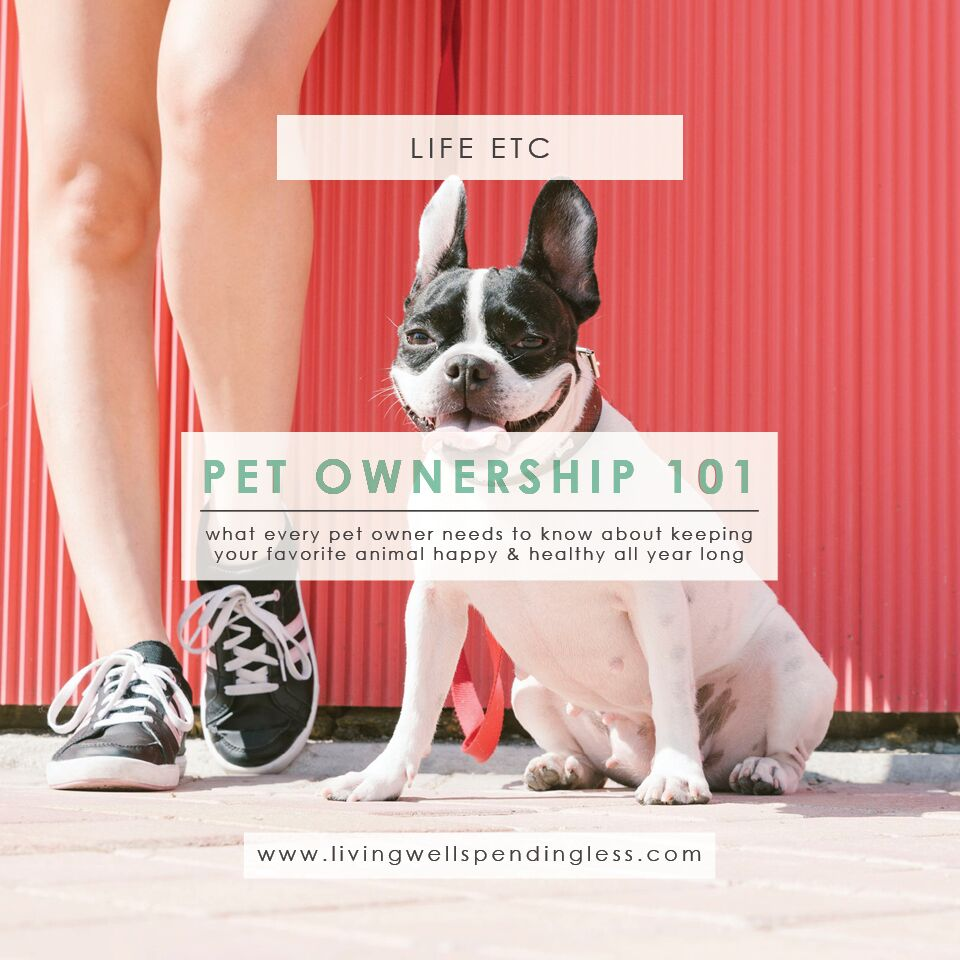 Pet Owner Tips | New Pet Owner | Pet Owner's Guide | Pet Ownership 101 | How to Keep Pets Healthy