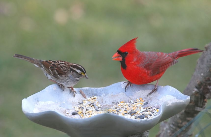 A red and brown bird eat outside at a bird feeder.